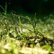 Grass green — Stock Photo