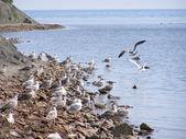 Sea birds ashore — Stock Photo