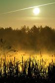 Morning on lake — Stock Photo