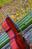 Music of autumn — Stock Photo