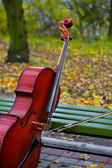Violoncello on a bench in — Stock Photo