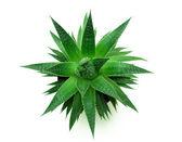 зеленый компас — Стоковое фото
