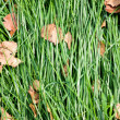 Laid grass — Stock Photo
