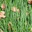 Laid grass — Stock Photo