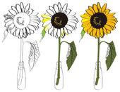 Sunflower_bottle — Stock vektor