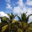 Tropical Sky — Stock Photo