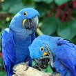 Royalty-Free Stock Photo: Macaw