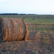 Round Bale of Hay - Stock Photo