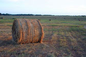 Round Bale of Hay — Stock Photo