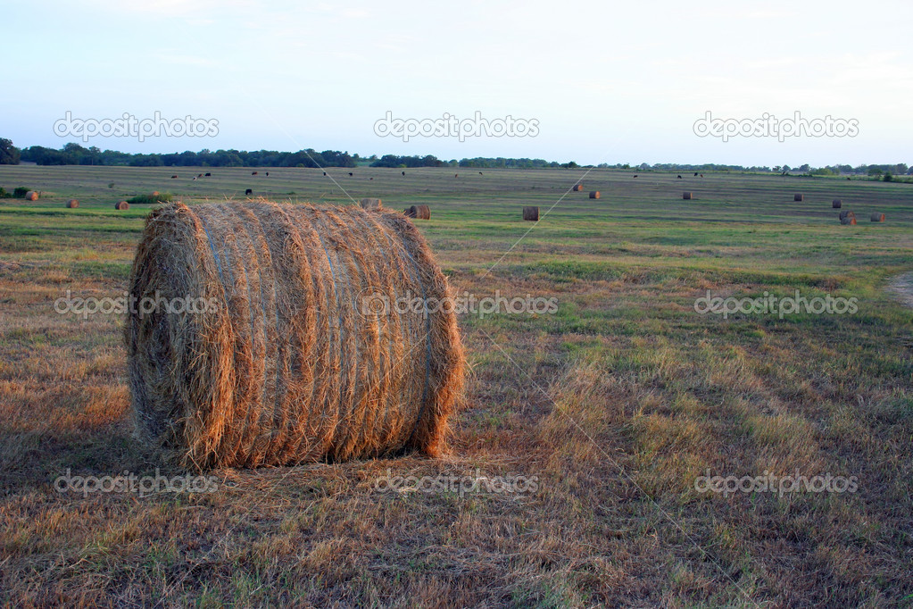 A round bale of hay drying in the field. — Stock Photo #1387793