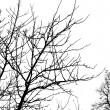 Stock Photo: Bare branches 1