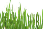 Green grass, horizontal format — Stock Photo