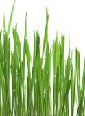 Green grass, vertical format — Stock Photo