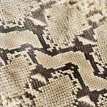 ������, ������: Snake skin leather