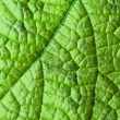 Green leaf structure — Stock Photo