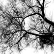 Stock Photo: Bare branches 3
