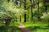 Wiosna w parku — Zdjęcie stockowe