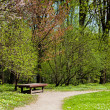 Stock Photo: Spring in park