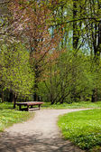 Spring in park — Stock Photo