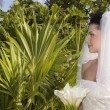 Stock Photo: CaribbeBeach Wedding