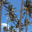Stock Photo: Looking up at palm tree from beach