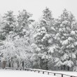 Fresh snow on the trees at the park. — Stock Photo