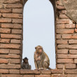 Monkeys in the Window — Stock Photo