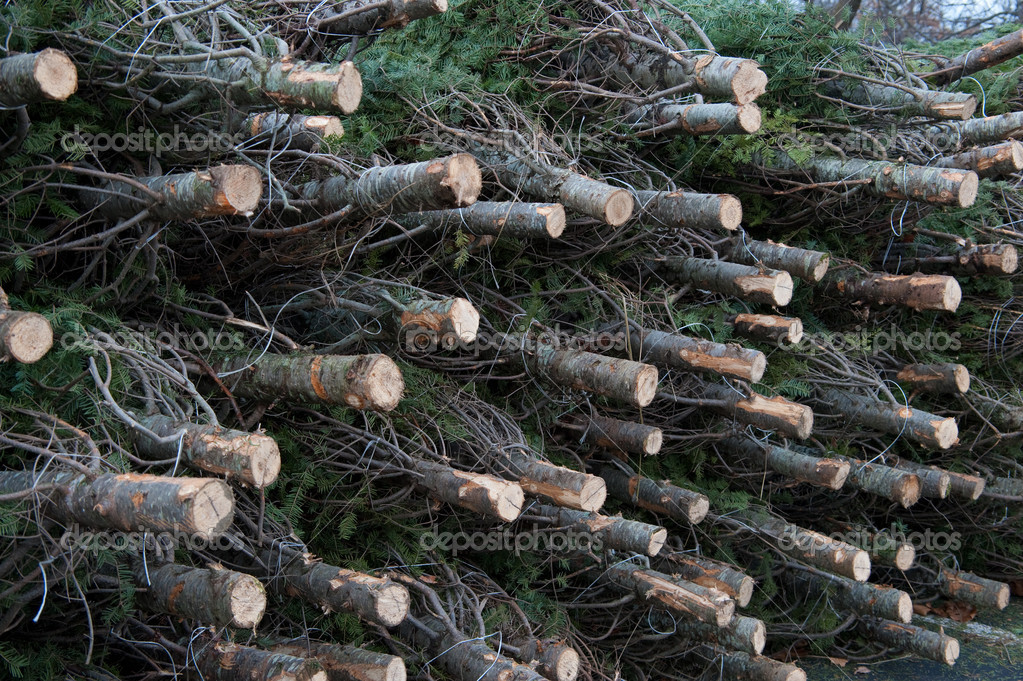 Cut Christmas trees stacked ready to sell — Stock Photo #1364488