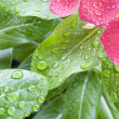 Stock Photo: Wet flower