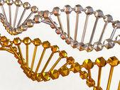 Gene in DNA — Stock Photo