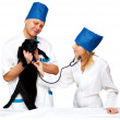 Stock Photo: Vet and cat