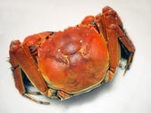 Chinese fresh water crab — Stock Photo