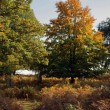 Autumn in Richmond Park, London — Stock Photo