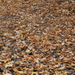 Royalty-Free Stock Photo: The fallen down leaves