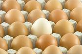 Muchos huevos frescos rurales — Foto de Stock