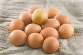 One golden egg — Stock Photo