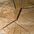 Stock Photo: Closeup wood cut texture