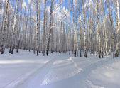 зимнее спокойствие — Стоковое фото