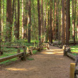 Armstrong Redwood Forest — Stock Photo #1412578