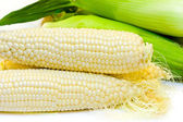 White corn — Stock Photo