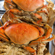 Dungeness crabs — Stock Photo