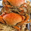 Dungeness crabs — Stock Photo #2461385