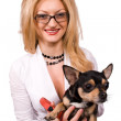 Blonde and chihuahua dog isolated — Stock Photo #1339267