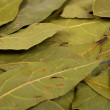 Laurel leaves background — Stock Photo