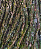 Bark of old tree. — Stock Photo
