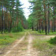 Stock Photo: Road in pine forest.