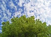 Background with maple foliage. — Stock Photo