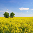Royalty-Free Stock Photo: Field