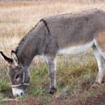Donkey — Stock Photo #1336851
