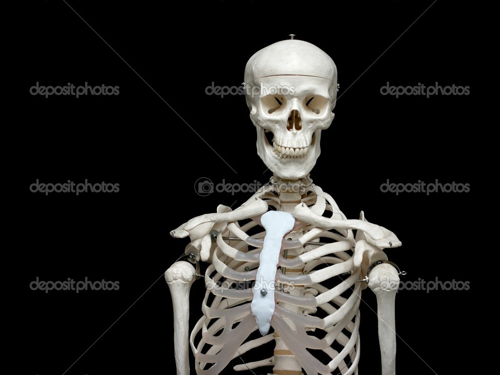 White skeleton model isolated on black background — Stock Photo #1336819